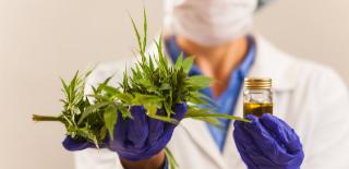 Médico segurando na mão esquerda uma planta e na mão direita, um vidro com liquido amarelo. O objetivo é mostrar que a fitoterapia ajuda a melhorar a imunidade.